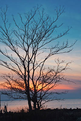 Photograph - Winter Sunset Silhouette by Gary Slawsky