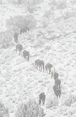 Photograph - Winter Trail by Kent Keller