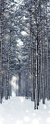 Photograph - Winter Travel I by Anne Leven