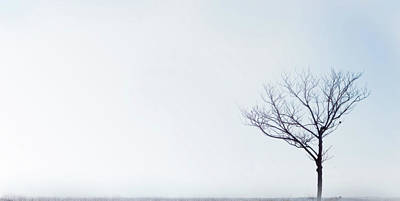 Photograph - Winter Tree. Arbol De Invierno by By Ana Gassent