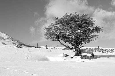 Photograph - Winter Tree by Helen Northcott