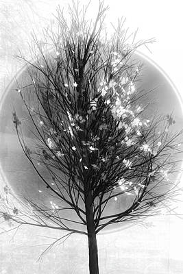 Photograph - Winter Tree In Black And White by Debra and Dave Vanderlaan