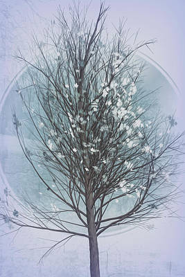 Photograph - Winter Tree In Cool Grays by Debra and Dave Vanderlaan