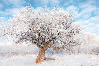 Photograph - Winter Tree by Karen Rispin