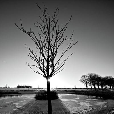 Photograph - Winter Tree by Photo By Anders Rörgren