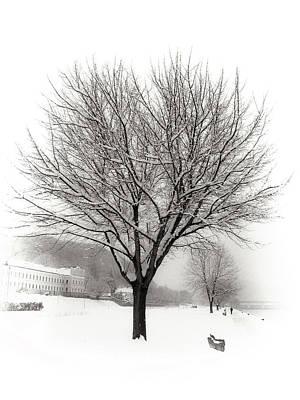 Photograph - Winter Trees Along The Danube At Ybbs by Menega Sabidussi