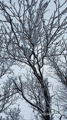 Photograph - Winter Trees by TJ Fox