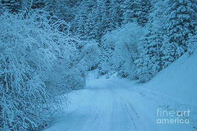 Photograph - Winter Wonderland by Tony Baca