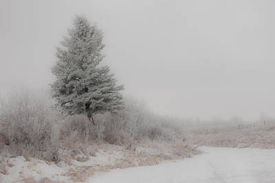 Photograph - Winter Woods 02 by Karen Rispin