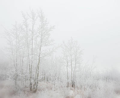 Photograph - Winter Woods 03 by Karen Rispin