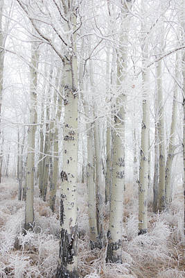 Photograph - Winter Woods 04 by Karen Rispin