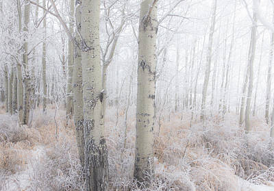 Photograph - Winter Woods 05 by Karen Rispin