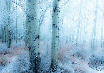 Photograph - Winter Woods by Philip and Karen Rispin
