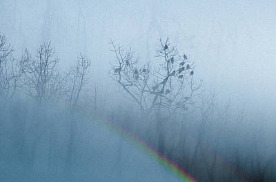 Photograph - Winter Woods_1 by Melanie McCabe
