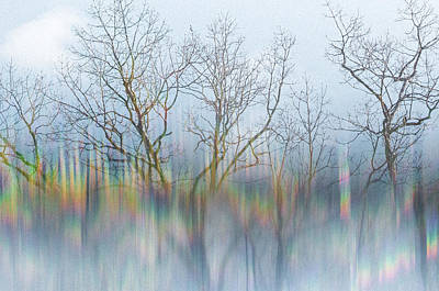 Photograph - Winter Woods_2 by Melanie McCabe