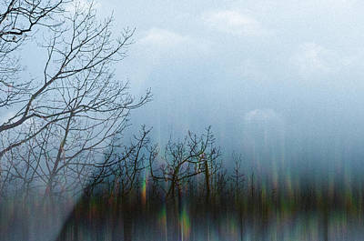Photograph - Winter Woods_3 by Melanie McCabe