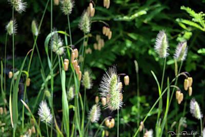 Photograph - Wintergreen Dream by Denise Barnhart
