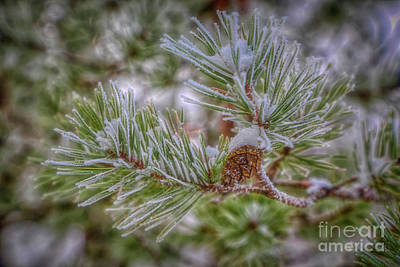 Lovely Lavender - Winterland 9 by Veikko Suikkanen
