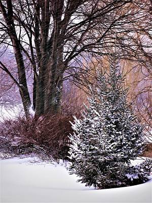 Photograph - Winter's Colors by Diane Chandler