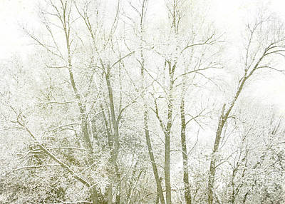 Photograph - Winter's First Sprinkle by Hal Halli