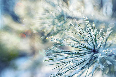 Photograph - Winters Magic by Marnie Patchett