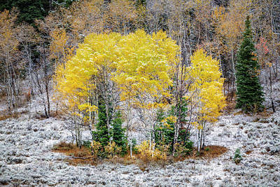 Photograph - Wintry Patch Of Fall by Michael Ash