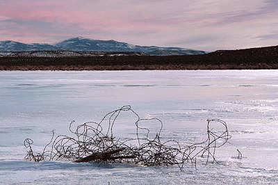 Photograph - Wire And Ice by Kathleen Bishop