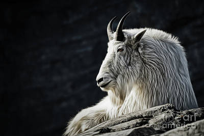 Photograph - Wisdom From Up High by Brad Allen Fine Art