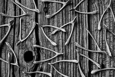 Photograph - Wishbones On Old Boards by Garry Gay