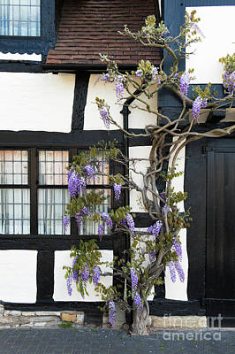 Photograph - Wisteria Cottage Stratford Upon Avon by Tim Gainey