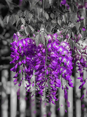 Photograph - Wisteria Falling by Lora J Wilson