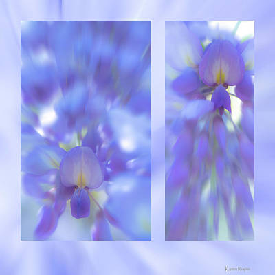 Photograph - Wisteria by Karen Rispin