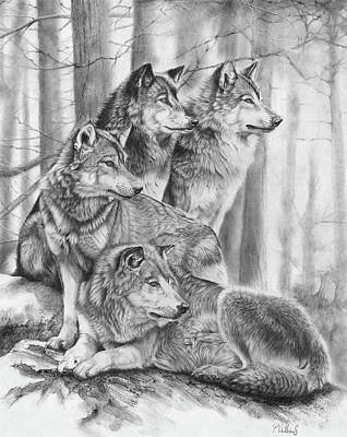 Animals Drawings - Wolf Pack by Peter Williams