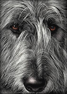 Drawing - Wolfhound by Elena Kolotusha