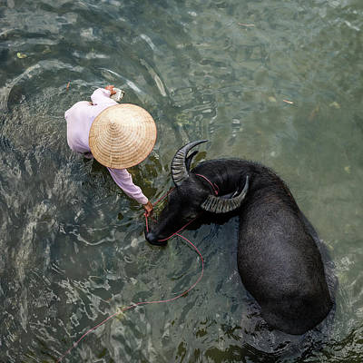 Photograph - Woman With Water Buffalo In Small River by Martin Puddy