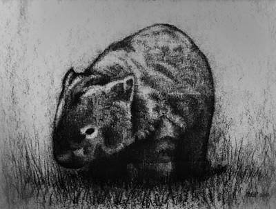 Animals Drawings - Wombat  by Michael Panno