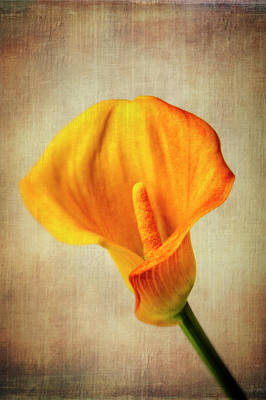 Photograph - Wonderful Textured Calla Lily by Garry Gay