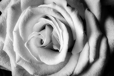 Photograph - Wonderful White Rose In Black And White by Garry Gay