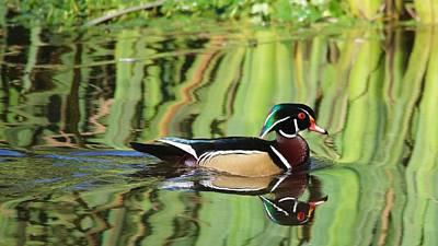 Photograph - Wood Duck Reflection 2 by Todd Kreuter