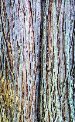 Photograph - Wood Log In Nature No.17 by Juan Contreras