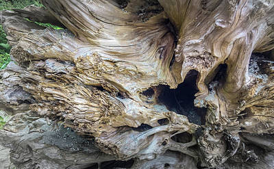 Photograph - Wood Log In Nature No.20 by Juan Contreras