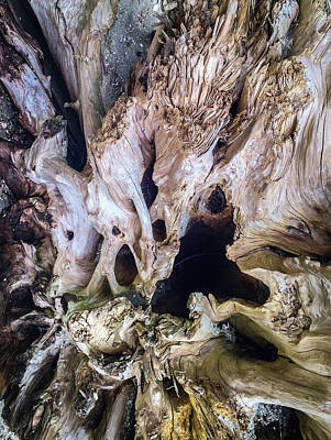 Photograph - Wood Log In Nature No.21 by Juan Contreras
