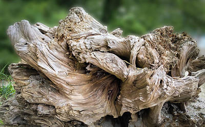 Photograph - Wood Log In Nature No.22 by Juan Contreras