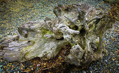 Photograph - Wood Log In Nature No.27 by Juan Contreras