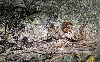 Photograph - Wood Log In Nature No.29 by Juan Contreras