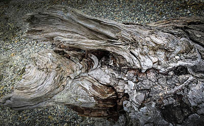 Photograph - Wood Log In Nature No.30 by Juan Contreras