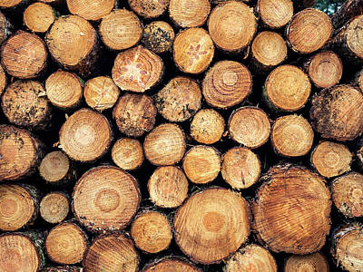 Photograph - Wood Pile by Nick Bywater