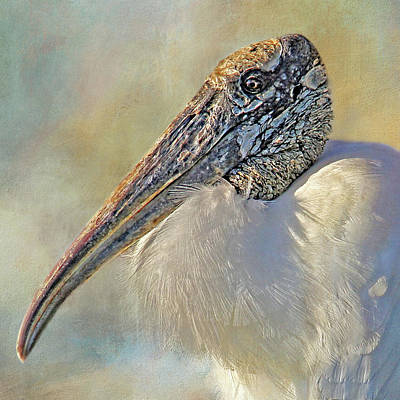 Photograph - Wood Stork 2 by HH Photography of Florida