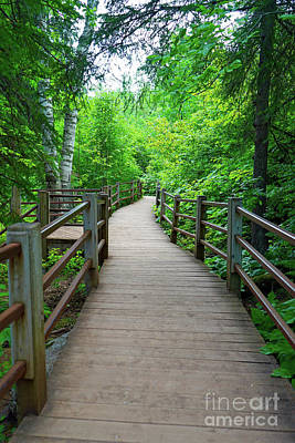 Photograph - Wood Trail At Gooseberry Falls by Susan Rydberg