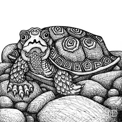 Drawing - Wood Turtle by Amy E Fraser